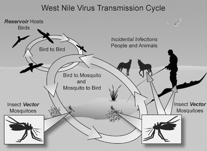West Nile Virus.