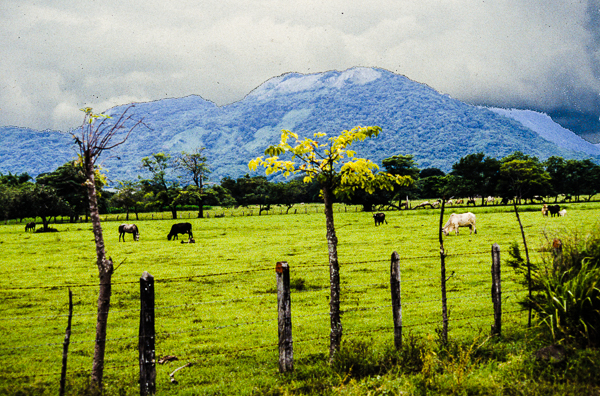 Cattle ranch in Guanacaste Province.