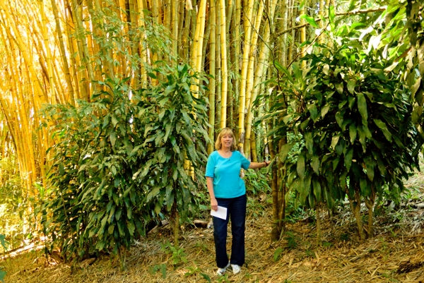 Rebecca in front of bamboo on a nature walk at the Xandari resort.